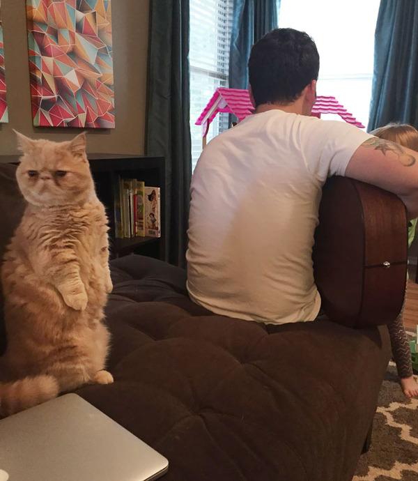 二足で直立する猫 8