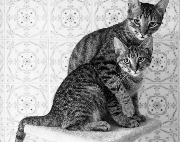 猫のバレンタインデー!【猫ラブラブ画像】 (16)