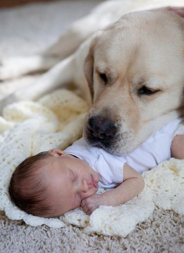 ペットは大切な家族!犬や猫と人間の子供の画像 (51)