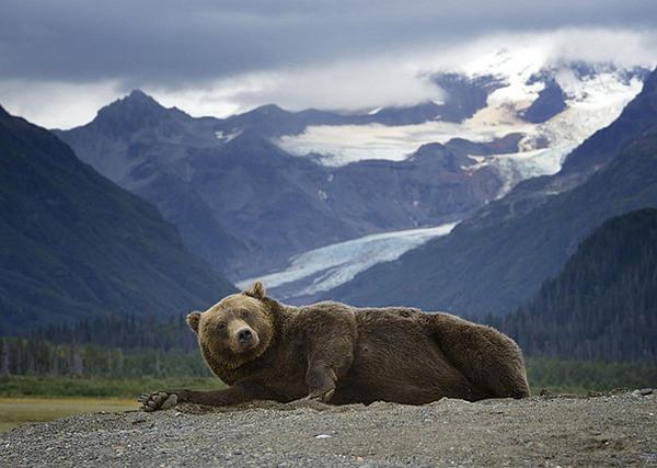 モデルのようにポーズを取る可愛い動物特集 クマ