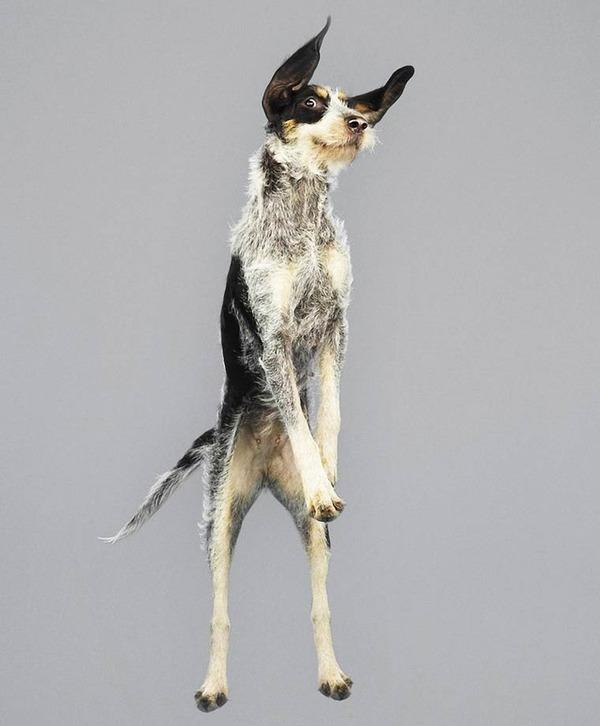 飛ぶ犬!空飛ぶわんこの絶妙な表情が逸品な写真 (17)