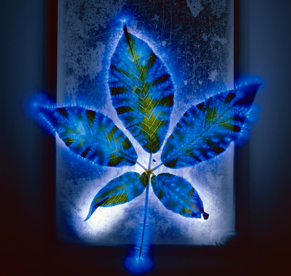 ビビッときた!!8万ボルトの電流で輝く感電した花の写真 (6)
