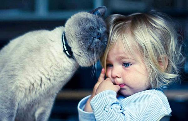 ペットは大切な家族!犬や猫と人間の子供の画像 (80)
