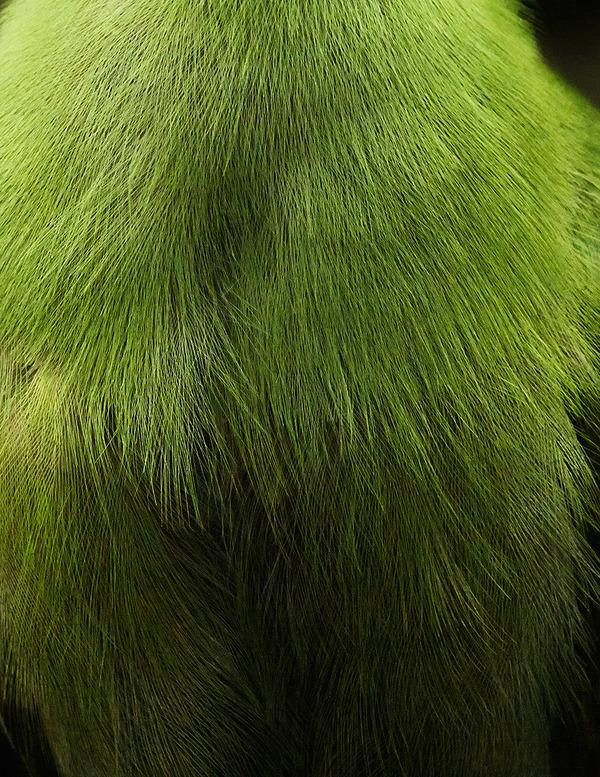 美しい鳥の羽根の写真 by Thomas Lohrby 4