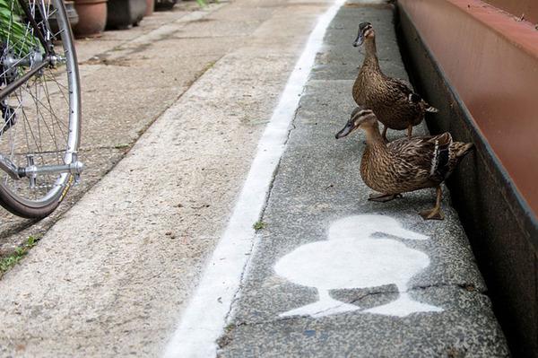 アヒル専用道路 ダックレーン duck lanes 6