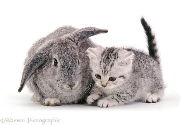似てる!親が違うのにそっくりな動物画像30枚 (5)