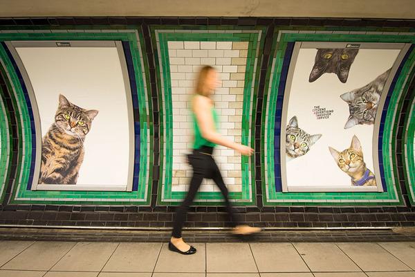 猫だらけ!猫の写真で満たされたロンドンの地下鉄 (9)