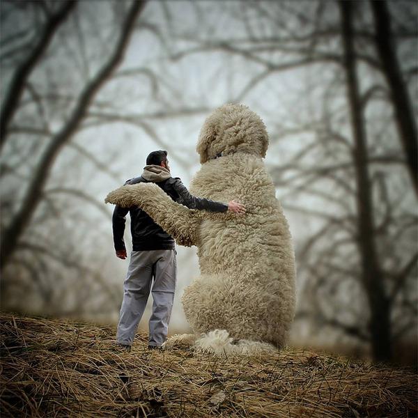 犬を大きくする!そんな夢をフォトショップの画像加工 (20)