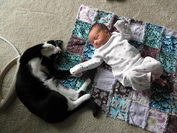 ペットは大切な家族!犬や猫と人間の子供の画像 (14)