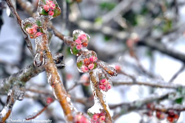 氷霧の後の花