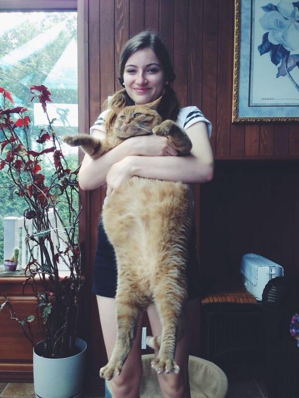 とても大きい猫の画像 35