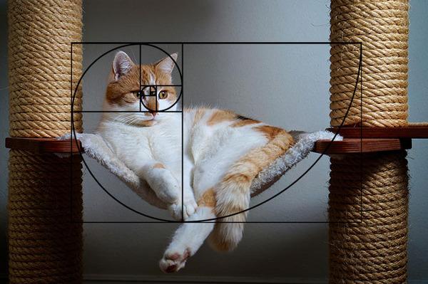 猫と黄金比の関係画像!猫の美しさの秘訣は黄金比にあり (22)