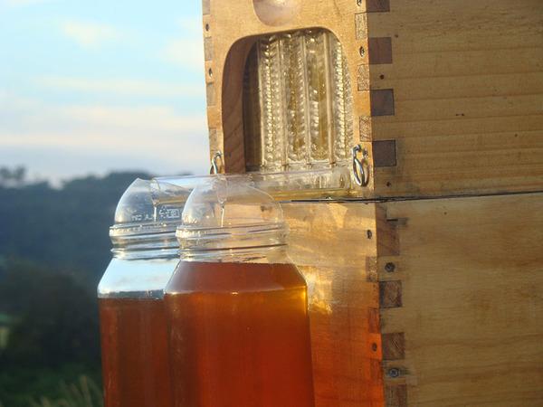 自動で蜂蜜を収集