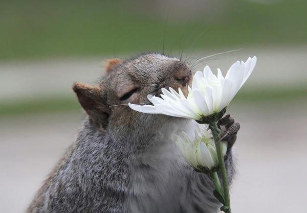 くんくん良い香り。花の匂いを嗅ぐ動物たちの画像 (1)