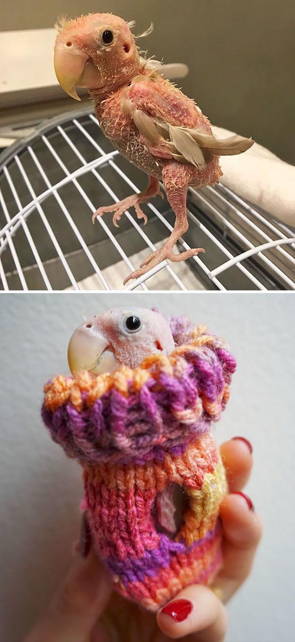 寒いからニットのセーターを小動物に着せてみた画像 (29)