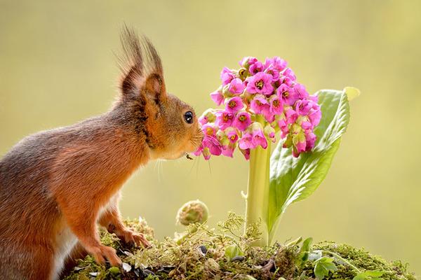 くんくん良い香り。花の匂いを嗅ぐ動物たちの画像 (16)