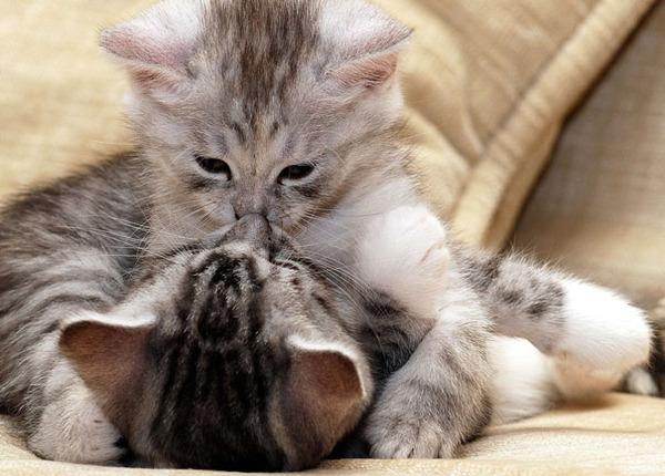 猫のバレンタインデー!【猫ラブラブ画像】 (63)