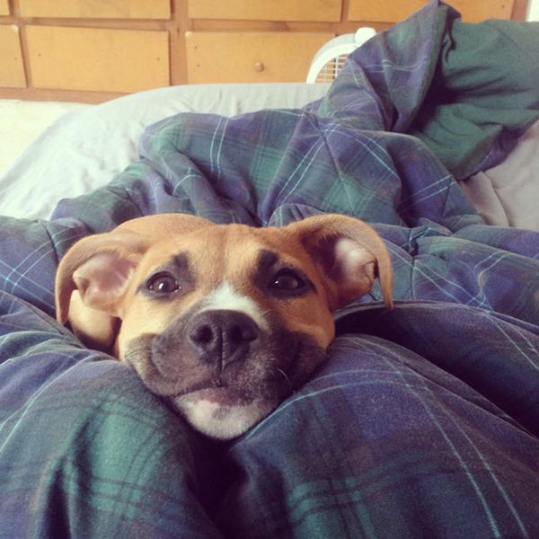 愛嬌たっぷりな笑顔を振りまくわんこ達!【犬画像】 (8)