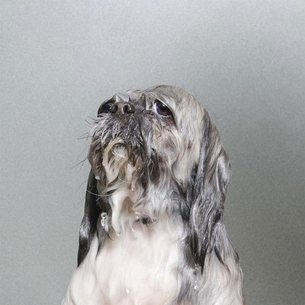洗い立てだぜ!濡れた犬の写真シリーズ『Wet Dog』 (14)