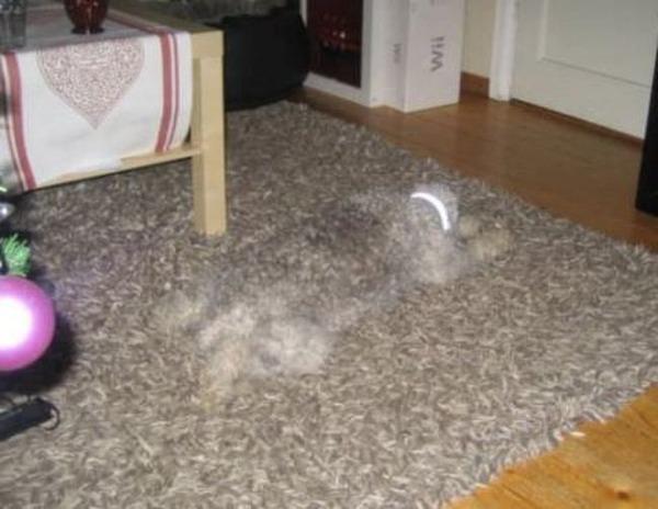 絨毯の一部となる犬