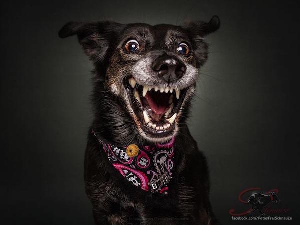ハングリー精神!犬が獲物を食らう瞬間の静止画像がヤバイ (4)