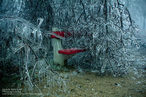 凍った公園