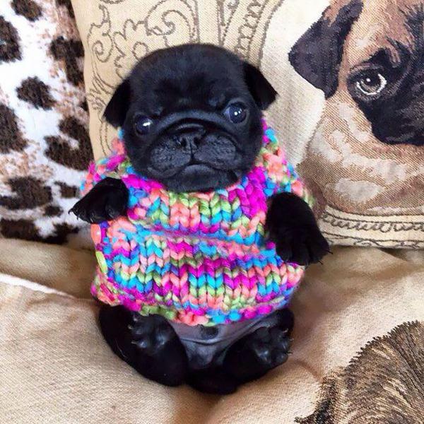 寒いからニットのセーターを小動物に着せてみた画像 (17)