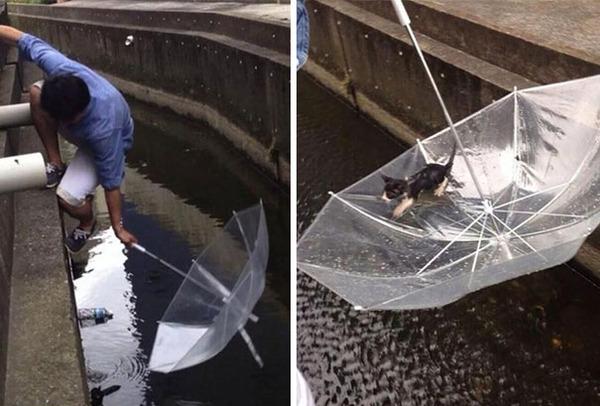 #6 おぼれている子猫を傘で救う