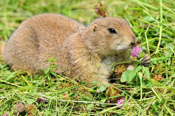 くんくん良い香り。花の匂いを嗅ぐ動物たちの画像 (23)