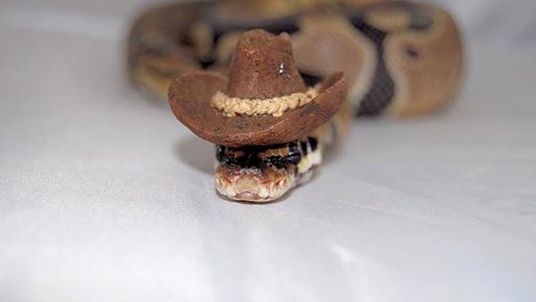 なんだこれカワイイぞ!帽子を被ったヘビ画像特集 (5)