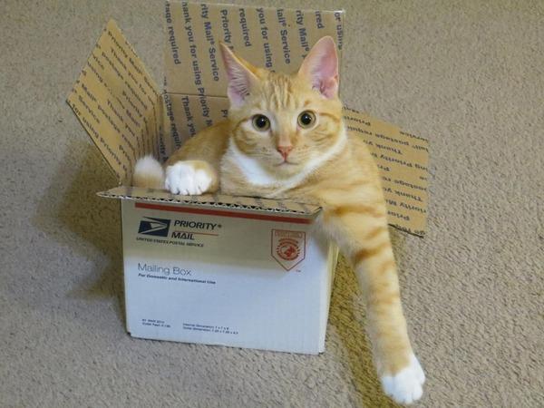 ジャストフィット猫 3