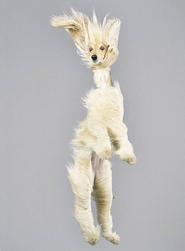 飛ぶ犬!空飛ぶわんこの絶妙な表情が逸品な写真 (14)