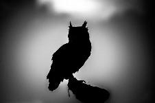 漆黒のシルエットとアウトラインが美しい動物のモノクロ写真