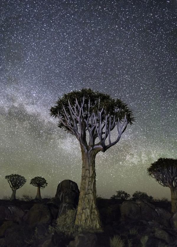 星空と古い木の美しい風景写真 8