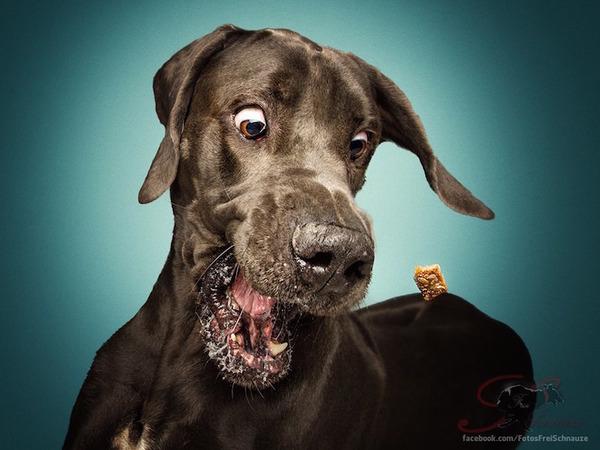 ハングリー精神!犬が獲物を食らう瞬間の静止画像がヤバイ (1)