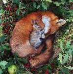 動物の友情!動物と動物の心温まる添い寝、昼寝の画像特集