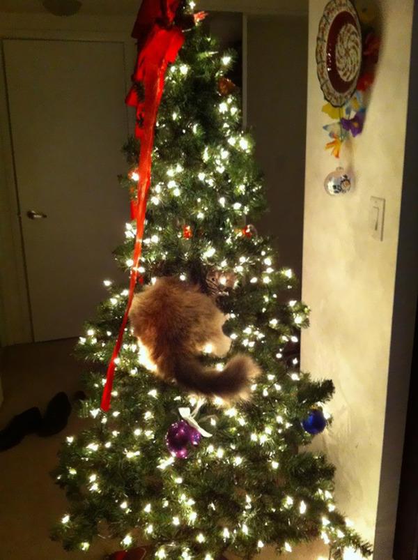 猫、あらぶる!クリスマスツリーに登る猫画像 (10)