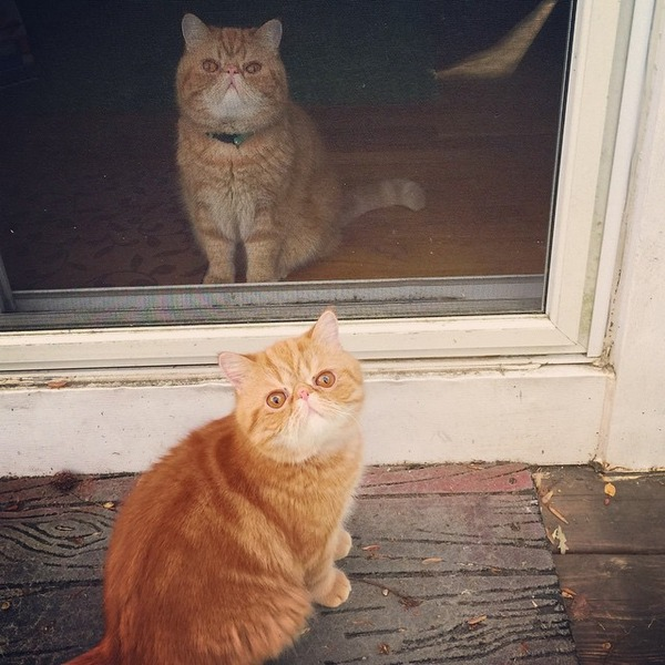 猫、アンガスとシェイマス angus-seamus 2