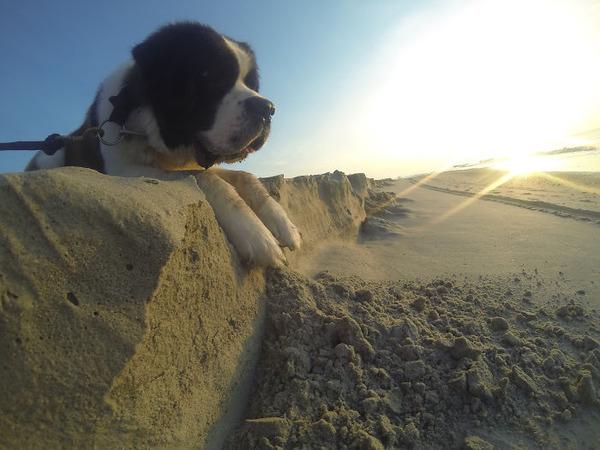 遠近感と錯覚の関係で超巨大に見える犬画像 (9)