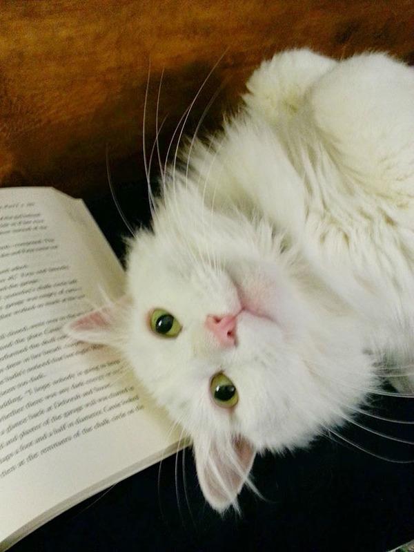 私と本とどっちが魅力的なんだにゃ