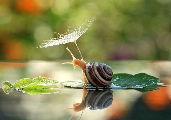 自然の傘を差す動物 4