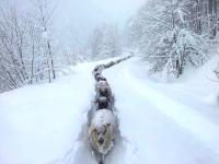【羊】猛吹雪の中を一列になって行進する羊達