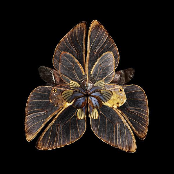 蝶々や昆虫の翅(はね)を合成して作った花の写真シリーズ (3)