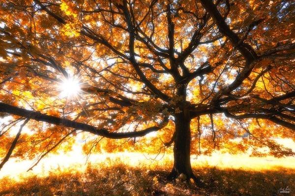 秋といえば紅葉や落葉の季節!美しすぎる秋の森の画像20枚 (7)