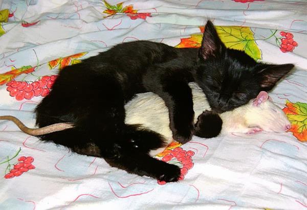 猫とネズミのお昼寝