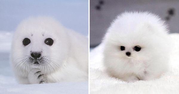 アザラシって犬そっくりじゃね?犬とアザラシを比較画像! (3)