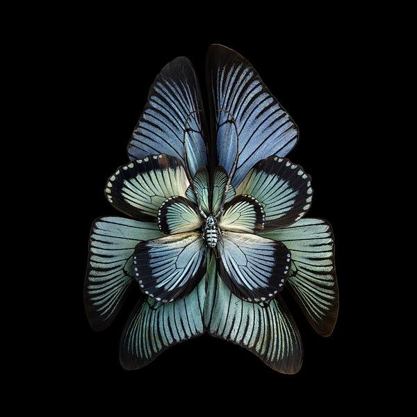 蝶々や昆虫の翅(はね)を合成して作った花の写真シリーズ (2)