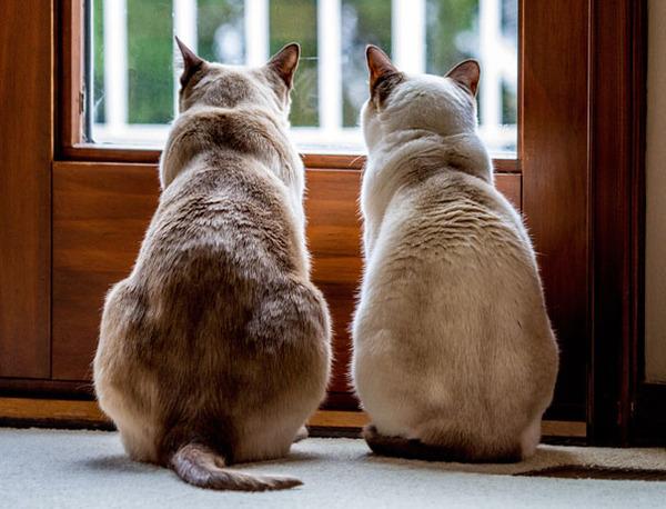 猫のバレンタインデー!【猫ラブラブ画像】 (17)