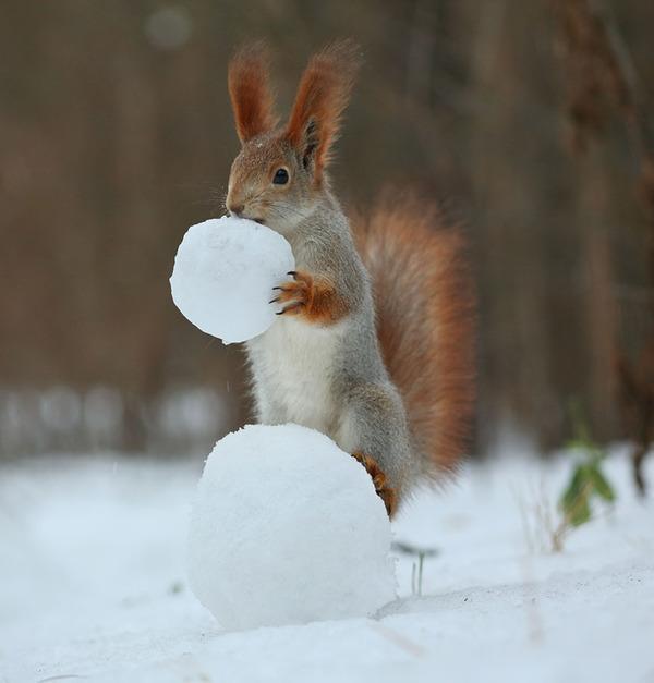 雪の中にはお宝が沢山