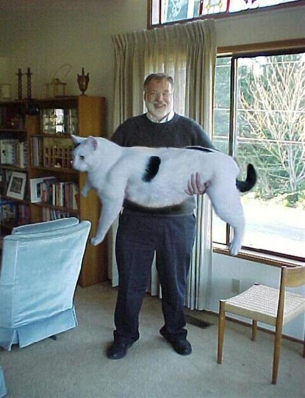 とても大きい猫の画像 30